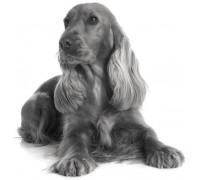 TONIVET | Croquettes de qualité pour chiens