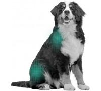 TONIVET | Croquettes chiens - Gamme Lab